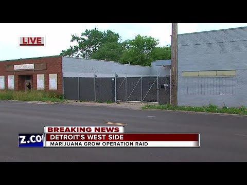 Police bust marijuana grow operation in Detroit