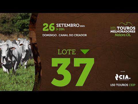 LOTE 37 - LEILÃO VIRTUAL DE TOUROS 2021 NELORE OL - CEIP