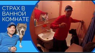 Страх в ванной комнате(Кане-корсо Тайсон)