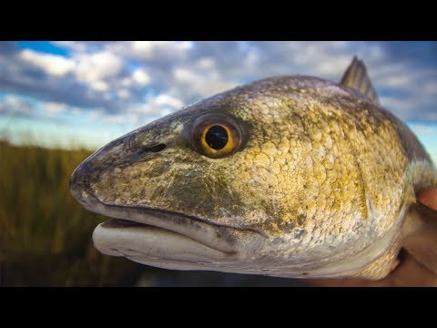 The Best Lures For Catching Redfish [Surprise Answer]