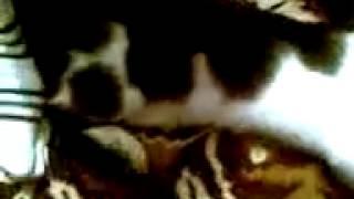 Знамение Аллаха надпись на кошке