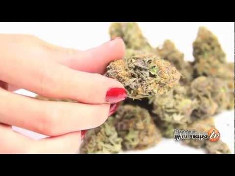 Metro Cannabis Denver Dispensary
