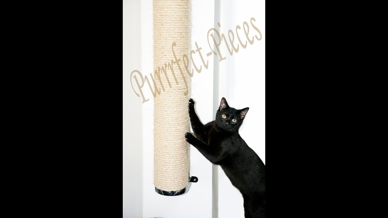 Modern Cat Furniture New From Julinka furthermore Stock Illustration Black Cat Scratching Wall Fun Cartoon Falling Down Curtain All Image61862752 as well Watch as well 3d Cat Furniture Set Modular Hangouts For Walls Ceilings together with Bookcase With Scratching Post And Hammock. on cat scratching wall
