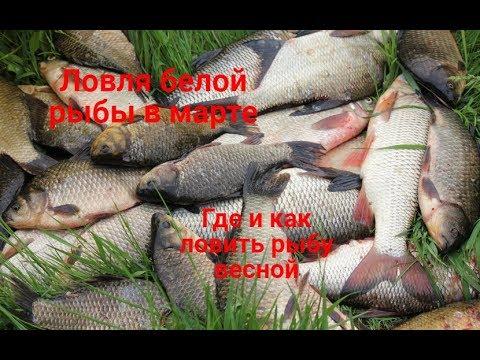 видео: Как ловить и где искать белую рыбу в марте. Ловля плотвы,леща,язя,голавля весной.