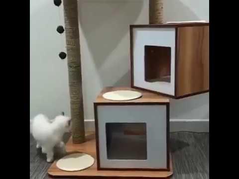 Exploring cat condo Vesper V Double