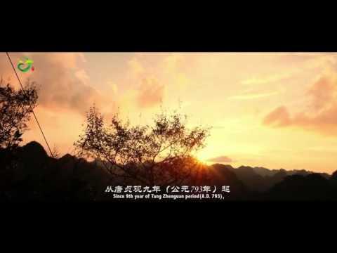 Duyun Maojian  都匀毛尖