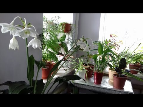 Вопрос: Как называется растение,похожее на цветок с жёлтым бутоном, в горах(см)?