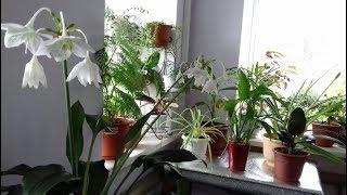 Обзор комнатных цветов. Как наши растения пережили зиму.<