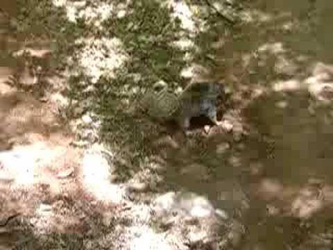 Fighting squirrels
