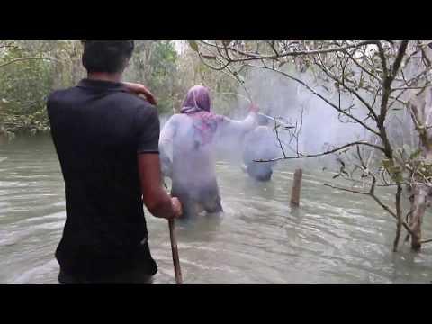 Honey Collection In Sundarban | Sundarban | Ahsan Ovi | Organico Honey |OxR Bangladesh