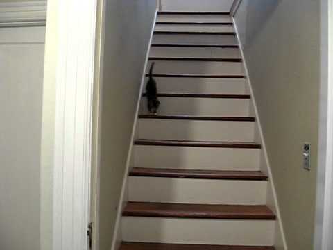Broken Leg Kitten Down The Stairs Youtube