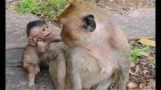 awesom monkey