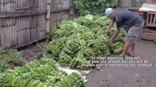 DAR CRS Misamis Oriental Agroenterprise (Banana Cardava Marketing)