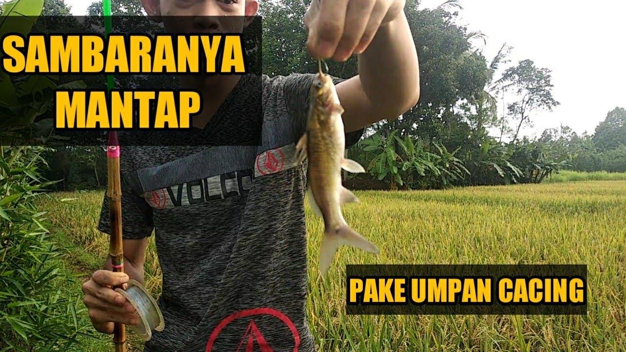 Spot Mancing Di Eretan Indramayu