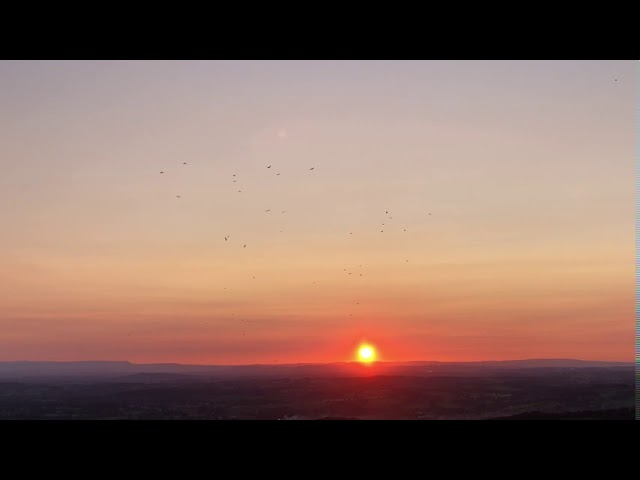 Sunset with rooks. Or is it jackdaws?