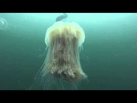 Fisher - Imagine Finding This Jellyfish At The Beach!