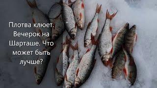 Крупная плотва клюет Вечерок на рыбалке что может быть лучше