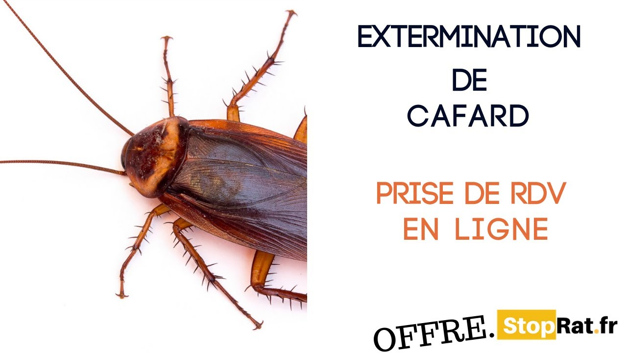 cafard definition francais