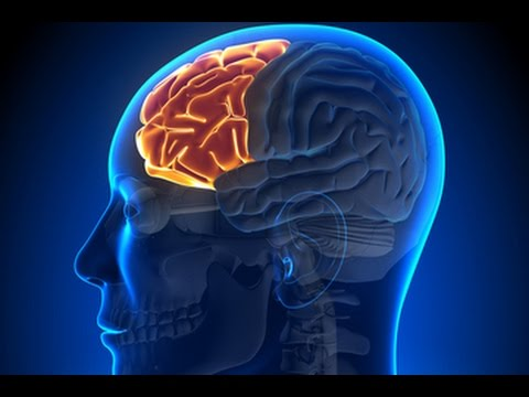 Man's Four Brains Pt 4: The Prefrontal Lobe - YouTube