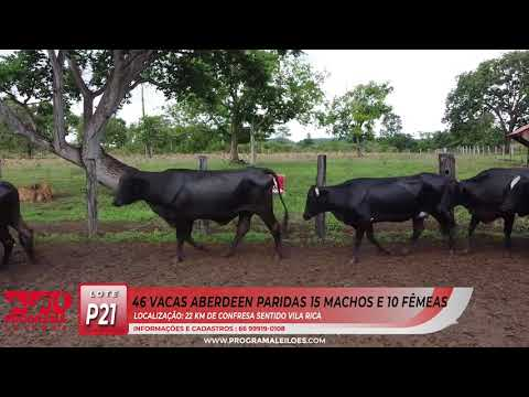 LOTE P21