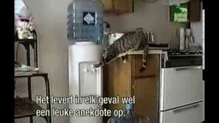 Funniest Home Videos 1 - Cats part 1 (Dutch subtitles-nederlands ondertiteld)