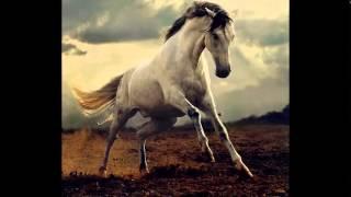 Xamanica - The Horse/Power Animals (Nialls)