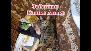 Забавная кошка по имени Анька.