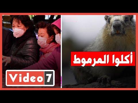 فيديو -أكلوا المرموط- السبب وراء ظهور الطاعون في الصين