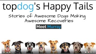 Happy Tail of Murray the Dog