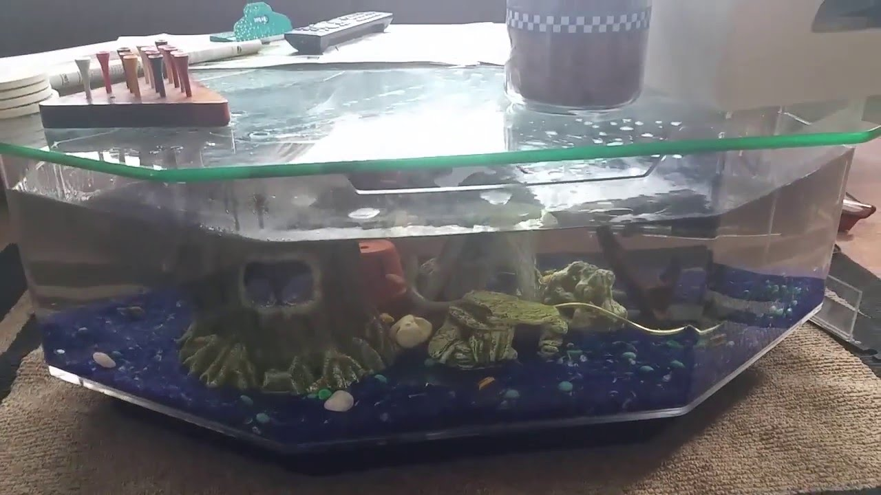 Fish tank table youtube for Youtube fish tank