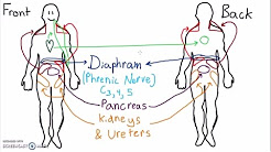 Abdominal Dermatomes and Referred Pain