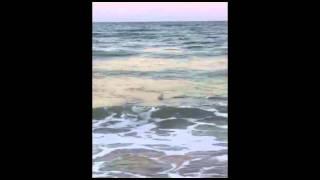 Ocean Isle Beach shark video by Greg Phillips