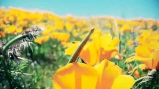 видео Калифорнийский маковый заповедник