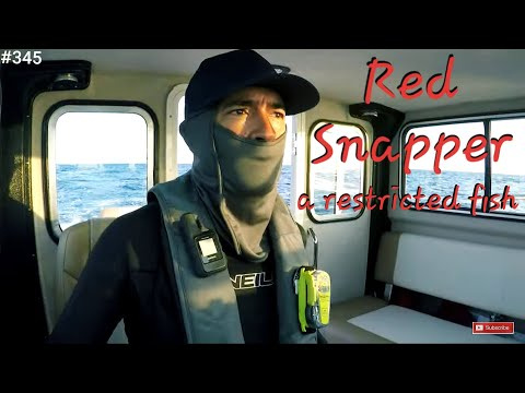 Red Snapper Why Strict Regulation? Crooked PilotHouse Atlantic Boat Deep Sea Fishing