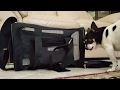 Sherpa Deluxe Pet Carrier Review