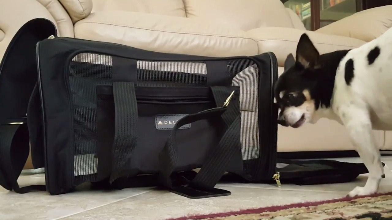 8651adf8f6 Sherpa Deluxe Pet Carrier Review - YouTube