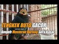 Masteran Burung Tengkek Buto Gacor Masteran Terbaik Suara Kasar  Mp3 - Mp4 Download