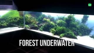 Forests Underwater by Takashi Amano (Lisbon Oceanarium)