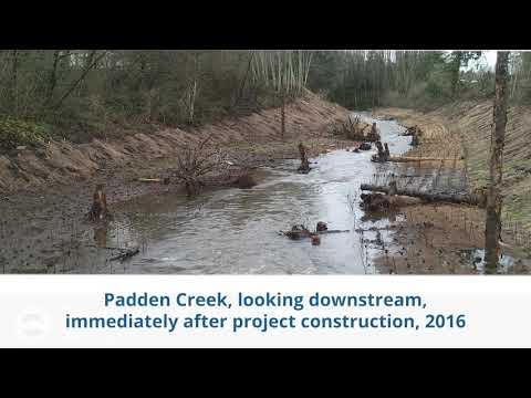 Restoring Padden Creek Habitat - Looking Downstream