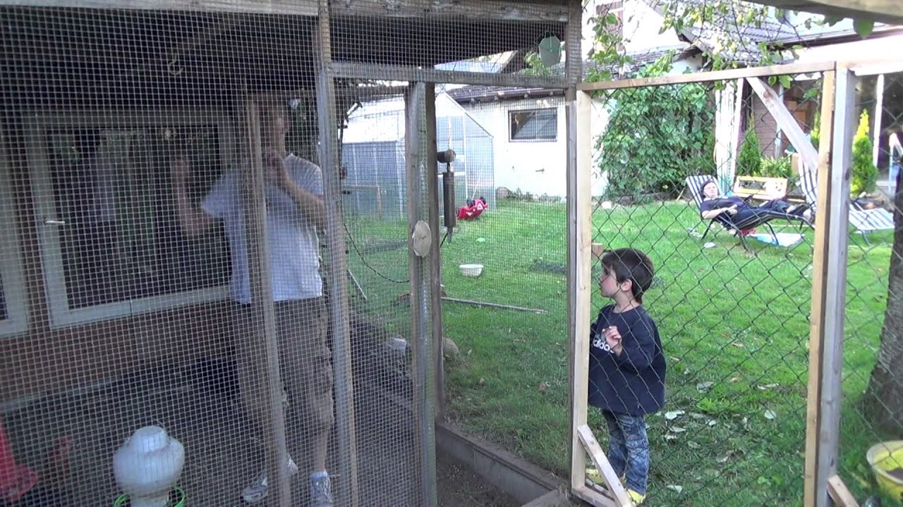 Freigehege für Hühner Artikelbild
