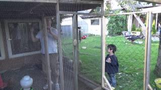 Freigehege für Hühner bauen | DIY