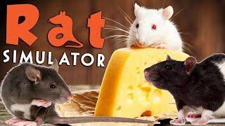 spreading the plague rat simulator amy lee