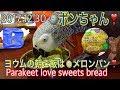 2017🐦ボンちゃんの朝ご飯はメロンパン❣️Parakeet love sweets bread