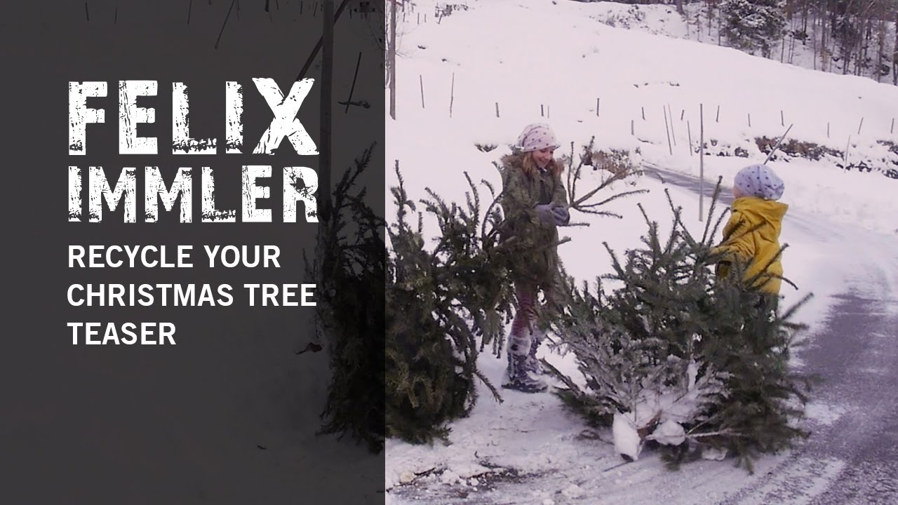 8 Ideas how to recycle your used Christmas Tree - Teaser - YouTube
