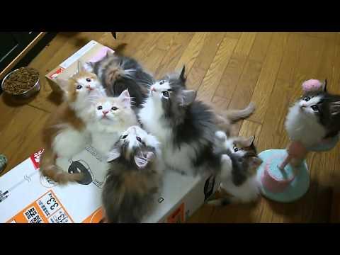 仔猫のパレード