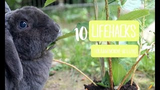 10 Lifehacks/Tipps für Kaninchen(-besitzer)