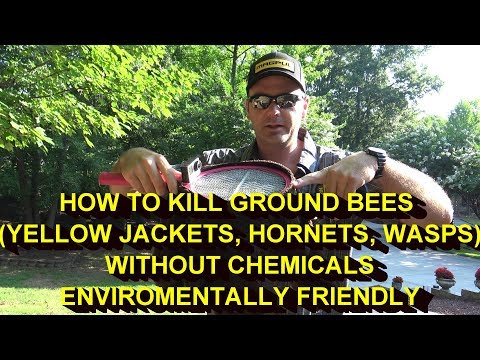 KILL YELLOW JACKETS NEST (ground bees)WITHOUT POISON OR CHEMICALS