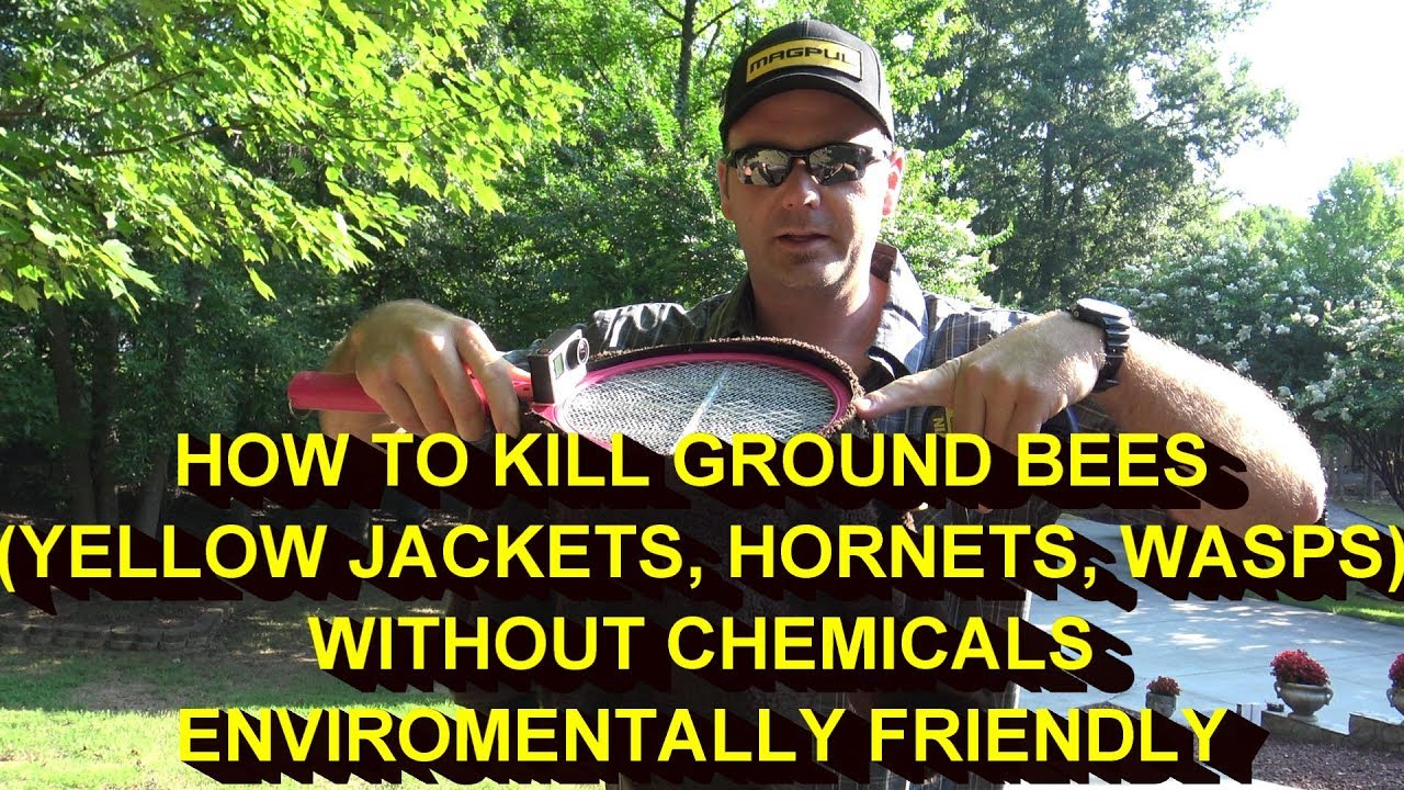 Kill yellow jackets in the ground - Kill Yellow Jackets Nest Ground Bees Without Poison Or Chemicals It Actually Works