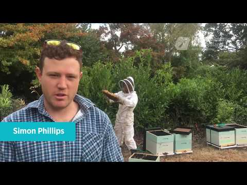Introducing bees to the Christchurch red zone
