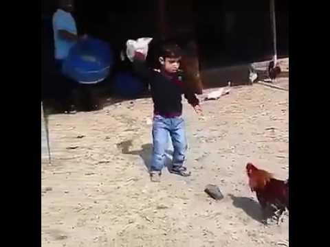 Little boy vs cock fight thumbnail
